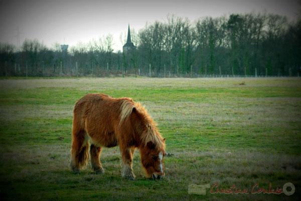 Poney le long du chemin de randonnée. Carignan-de-Bordeaux