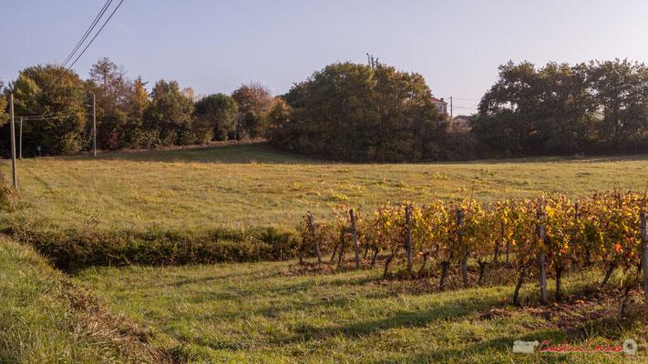 Le hameau de Mons est masqué par la végétation. Avenue de Mons, Cénac, Gironde. 16/10/2017