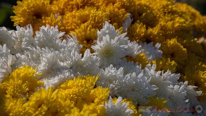 Chrysanthèmes, Art funéraire chrétien, Cimetière marin de Talmont-sur-Gironde