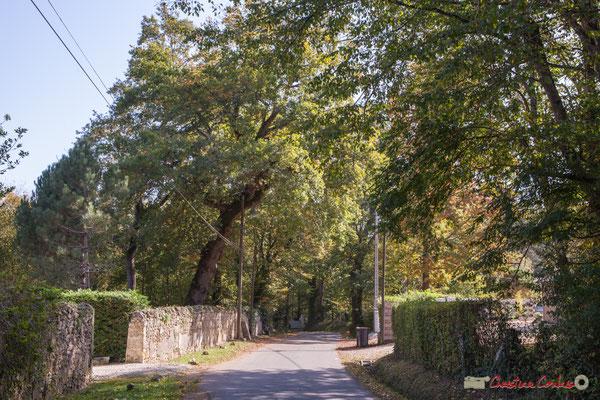 Mur de pierre sèche, issu du Domaine de Fonlabade sur lequel fut construit le Château Rauzé. Avenue du Rauzé, Cénac, Gironde. 16/10/2017