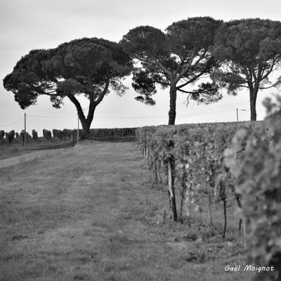 Domaine de Malagar, Saint-Maixant. 28/09/2019. Photographie © Gaël Moignot