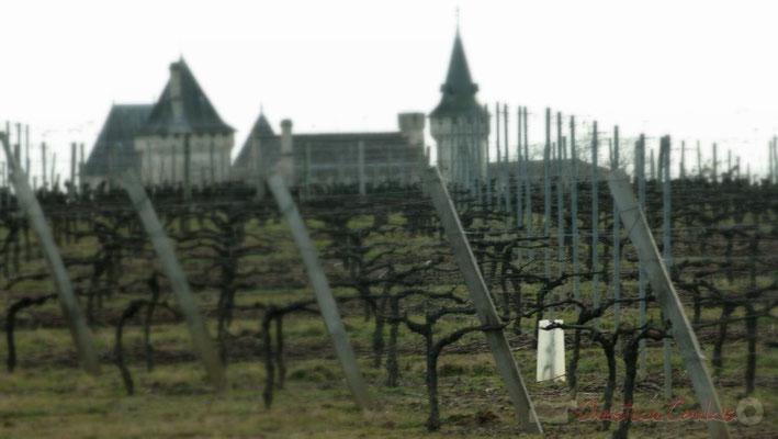 Vignoble en hiver. Château Carignan en approche, Carignan-de-Bordeaux