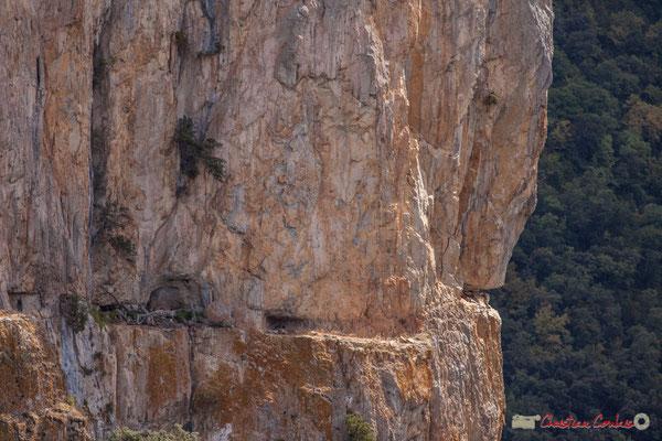 objectif 400mm. Balcon pour vautour fauve, Belvédère d'Iso, Gorge de Arbaiun, Navarre / Balcón para el buitre leonado, Belvedere de Iso, Foz de Arbaiun, Navarra