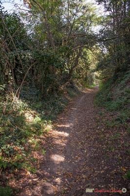 Le chemin de Brice, longe sur la droite les anciennes terres de la maison Capeyran. Cénac, Gironde. 16/10/2017
