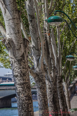 Tree loving arts, Quai des Tuileries, Paris 1er