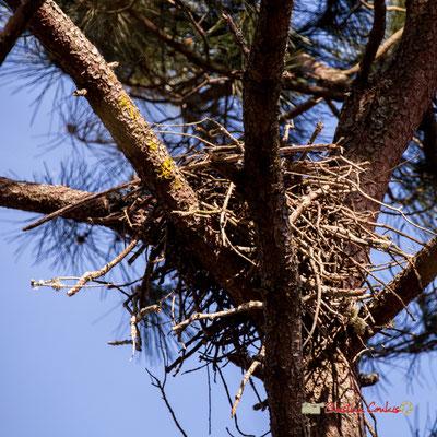 Nid, réserve ornithologique du Teich. Samedi 16 mars 2019