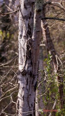 Tronc IV, réserve ornithologique du Teich. Samedi 16 mars 2019