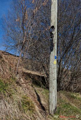 Un des risques de l'écobuage, poteau téléphonique attaqué par le feu. Cirque de Lescun, D340, Escouay, vallée d'Aspe, Pyrénées-Atlantiques
