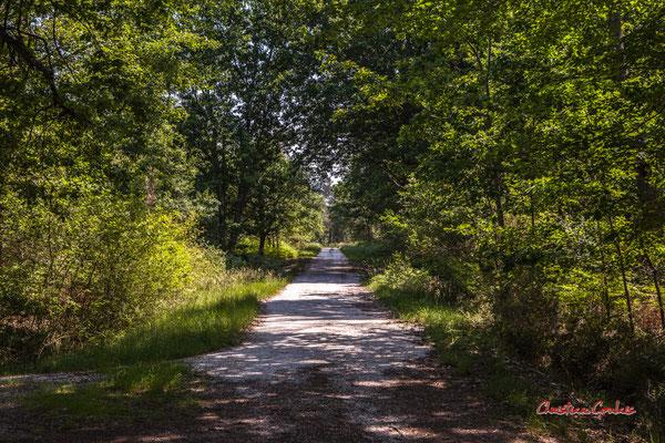 1/2 Allée engravée. Forêt de Migelan, espace naturel sensible, Martillac / Saucats / la Brède. Vendredi 22 mai 2020. Photographie : Christian Coulais