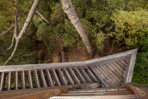 Nous sommes vigie de la Réserve naturelle de l'étang de Cousseau, depuis cette tour d'observation...