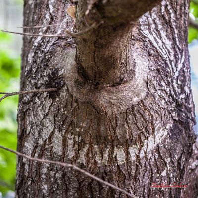 """""""Arc en cercle"""" Forêt de Migelan, espace naturel sensible, Martillac / Saucats / la Brède. Samedi 23 mai 2020. Photographie : Christian Coulais"""