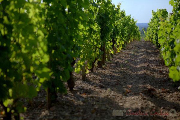 Vignoble du Château d'Yquem, Sauternes