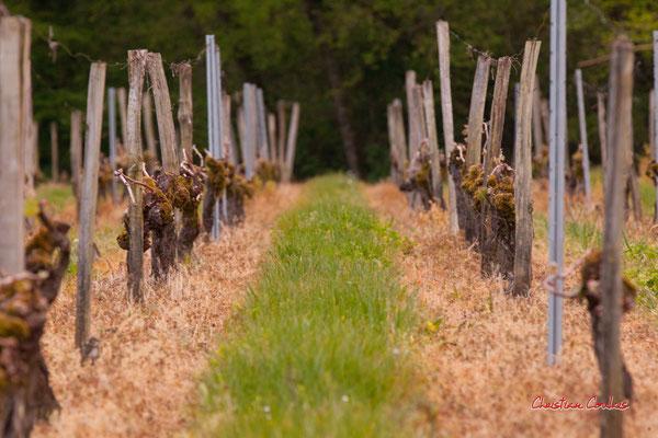 Vignes du Château Haut-Brignon, Cénac. Mardi 7 avril 2020. Photographie : Christian Coulais