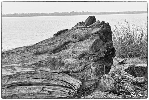 Nature morte à Roque de Thau. Villeneuve/Gauriac, samedi 26 septembre 2020. Photographie © Raymond Joubert