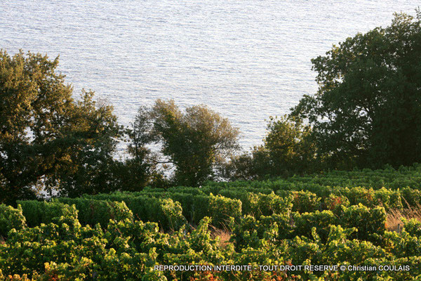 Vignoble des Côtes de Bourg, le long de la Dordogne, depuis le Château Eyquem