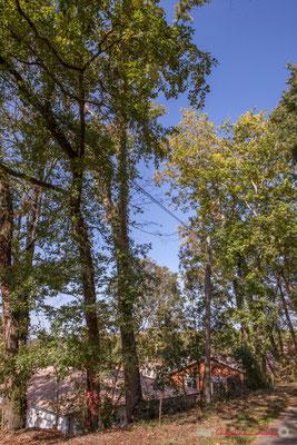 Derrière une belle frondaison de chênes, le Clos Lamothe, à gauche vers Latresne. Allée Lamothe, Cénac, Gironde. 16/10/1017