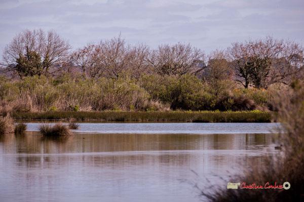 Réserve ornithologique du Teich. Samedi 16 mars 2019. Photographie © Christian Coulais