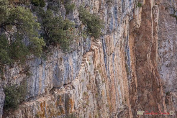 9/9 Vautour fauve en vol d'approche de son nid / Buitre beonado que se acerca al nido, Foz de Arbaiun, Navarra