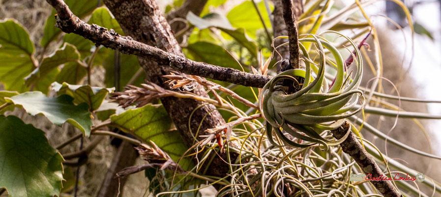 Serre tropicale du Bourgailh, Pessac. 27 mai 2019