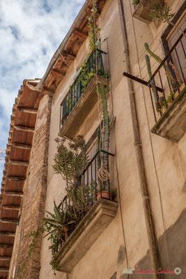 Façade de maison aux multiples cactées aux balcons / Fachada de casa con múltiples cactus en los balcones, Tudela, Navarra