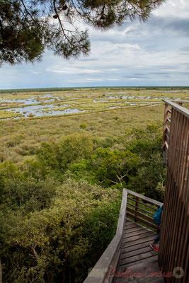 Au Nord-Est, en direction des marais de l'étang de Cousseau....