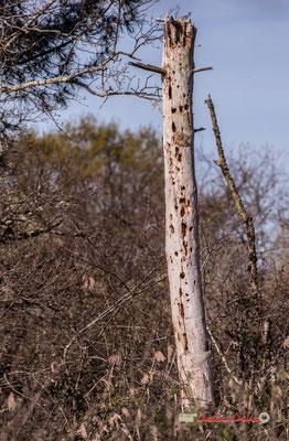 Arbre mort, réserve ornithologique du Teich. Samedi 16 mars 2019