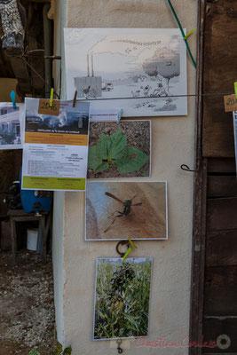 Plantes et insectes difformes par la pollution chimique. Saint-Genès-de-Lombaud, Gironde