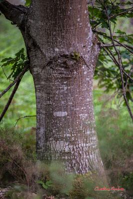 """""""œil"""" Forêt de Migelan, espace naturel sensible, Martillac / Saucats / la Brède. Samedi 23 mai 2020. Photographie : Christian Coulais"""