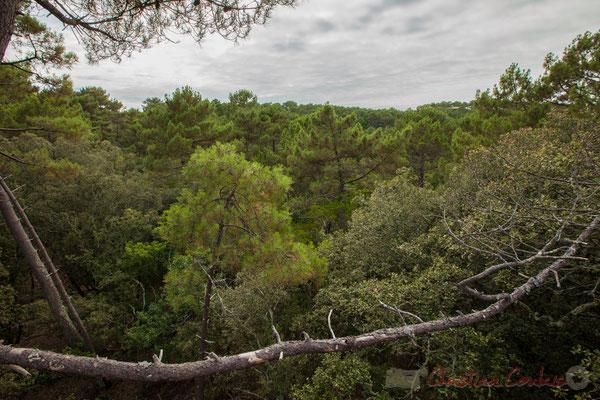 À l'ouest, au dessus des cimes des pins maritimes de la Réserve naturelle de l'étang de Cousseau...