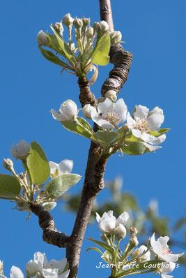 """""""C'est le printemps"""". Réserve ornithologique du Teich. Photographie Jean-Pierre Couthouis. Samedi 16 mars 2019"""