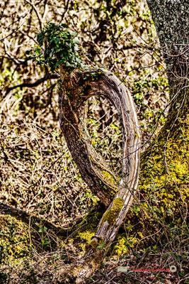 Land art II. Réserve ornithologique du Teich. Samedi 16 mars 2019