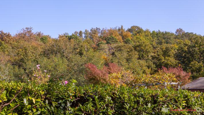 C'est dommageable que la haie ne soit pas en adéquation avec la lisière de la forêt et de la vallée du Rauzé. Avenue du bois du moulin, Cénac, Gironde. 16/10/2017