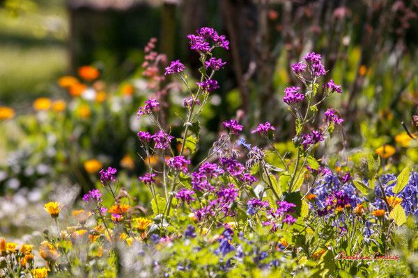 Plate-bande florale, Cénac. Dimanche 5 avril 2020. Photographie : Christian Coulais