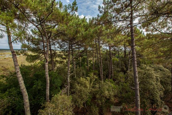 À l'est, vers la forêt domaniale de Lacanau, un orage se forme...Étang de Cousseau