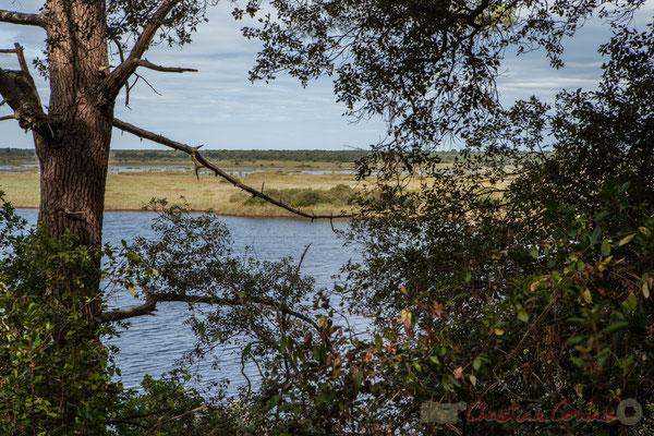 À l'étang de Cousseau succède au loin son marais...