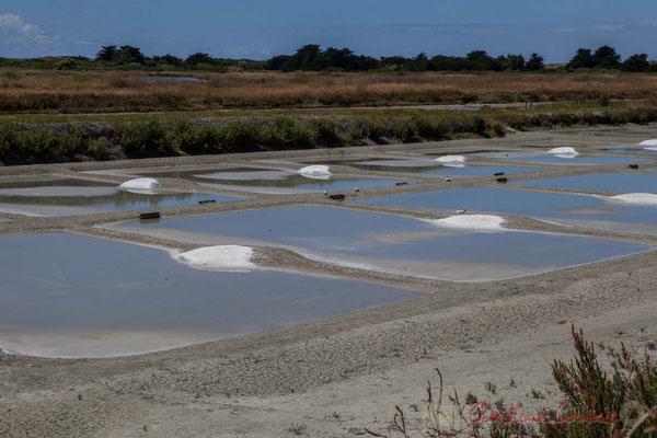 Les œillets des marais salants de l'Île de Noirmoutier entre l'Epine et Noimoutier en l'Île, Vendée, Pays de la Loire