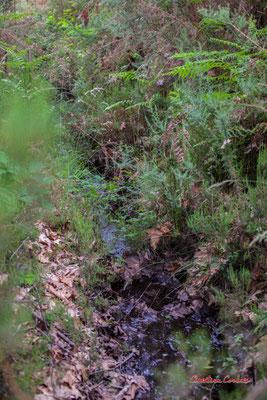 1/2 Craste Forêt de Migelan, espace naturel sensible, Martillac / Saucats / la Brède. Samedi 23 mai 2020. Photographie : Christian Coulais