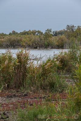 Au loin, l'étang du Scamandre. Réserve naturelle régionale de Scamandre, Vauvert