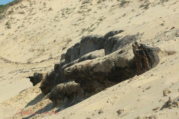 Il aura fallu 4 000 ans à la dune du Pilat pour apparaître. Espace naturel sensible, la Teste-de-Buch