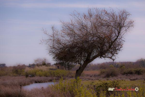 Land art V. Réserve ornithologique du Teich. Samedi 16 mars 2019. Photographie © Christian Coulais