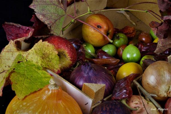 Nature morte végétale, Atelier Photo Numérique de l'AMAC. 09/11/2019 Photographie © Gaël Moignot