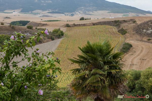 Depuis Lumbier, hibiscus simple mauve, palmier et champ de céréales. Navarra