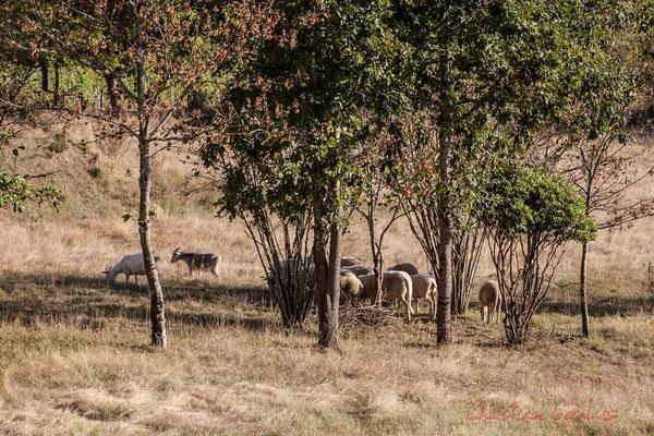 Tandis que les animaux paissent, la campagne est belle et paisible, un peu comme pour le nucléaire, mais là cela se voit, cela se sent !
