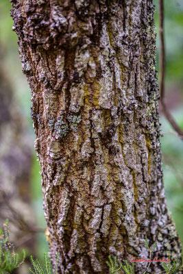 """1/2 """"Structurécorce"""" Forêt de Migelan, espace naturel sensible, Martillac / Saucats / la Brède. Samedi 23 mai 2020. Photographie : Christian Coulais"""