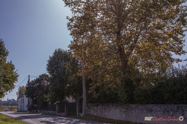 2 Parc du château Guinault. Avenue de Bordeaux, Cénac, Gironde. 16/10/2017