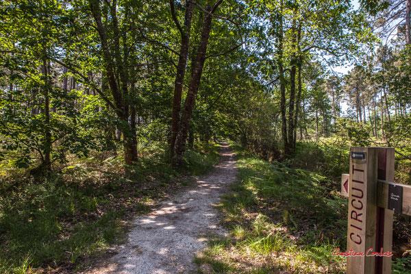 2/2 Allée engravée. Forêt de Migelan, espace naturel sensible, Martillac / Saucats / la Brède. Vendredi 22 mai 2020. Photographie : Christian Coulais