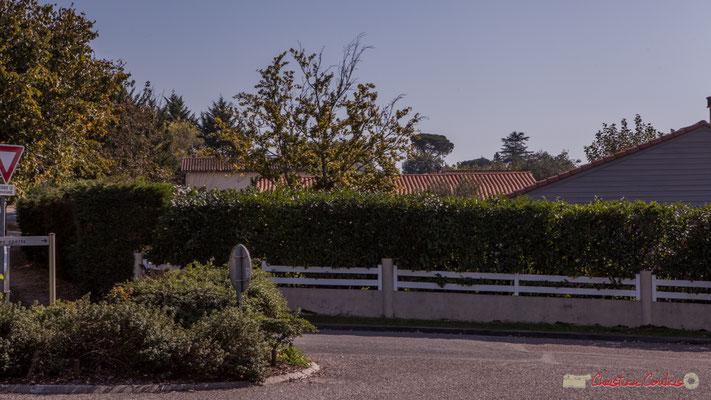 Beaux arbres du parc du château Guinault en ligne de fond. Carrefour de l'allée du Stade et de l'avenue de Bordeaux, Cénac, Gironde. 16/10/2017