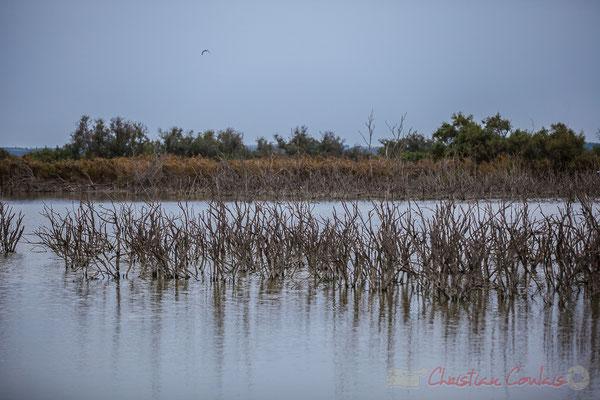 Bois mort immergeant du marais. Réserve naturelle régionale de Scamandre, Vauvert