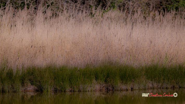 Land art I. Réserve ornithologique du Teich. Samedi 16 mars 2019. Photographie © Christian Coulais