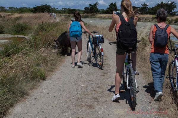 Rencontre de cyclistes avec un poney dans les marais salants de l'Île de Noirmoutier entre l'Epine et Noimoutier en l'Île, Vendée, Pays de la Loire